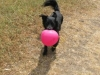 luftballon_img_2834