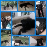 Lenny Fotor_Collage