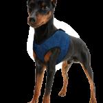 Kühlgeschirr Hund Aqua Coolkeeper